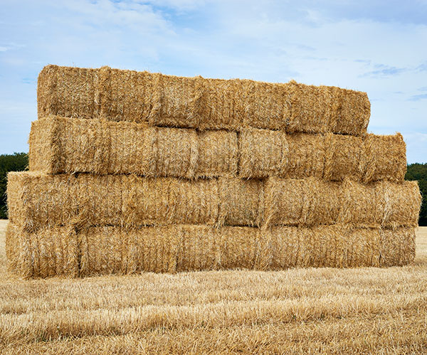 Square bales in a big stack